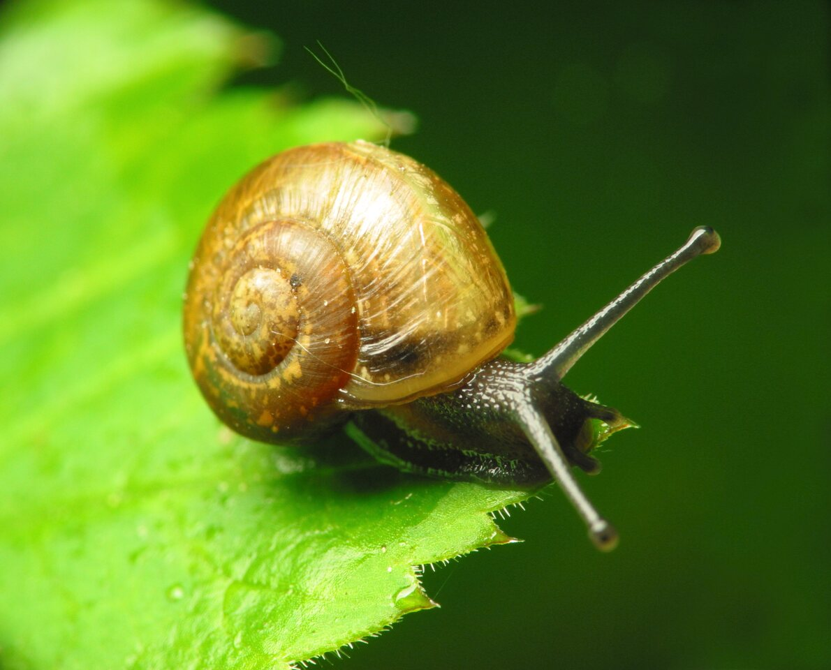 Mollusca-1015.jpg