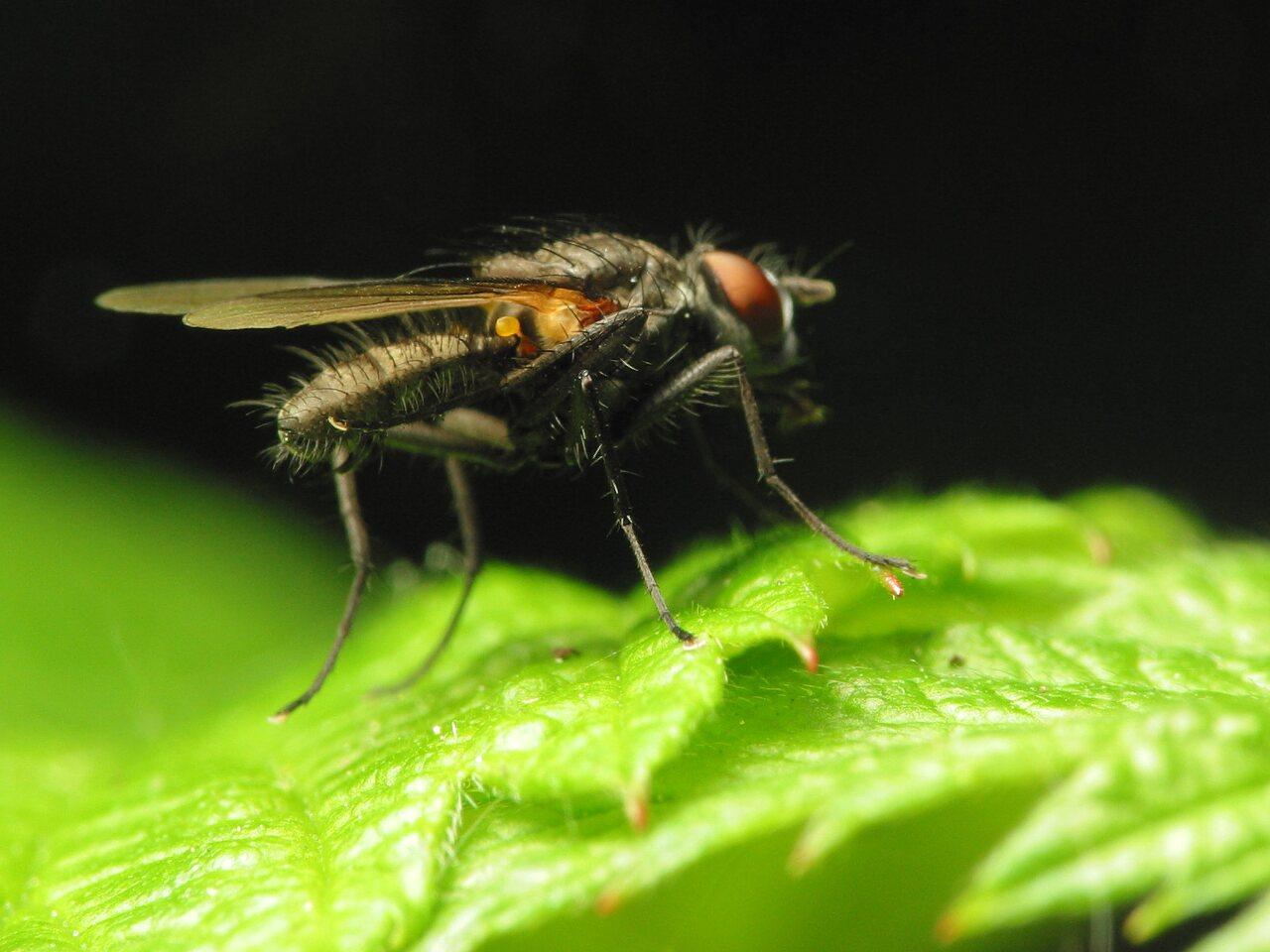 Diptera-1017.jpg