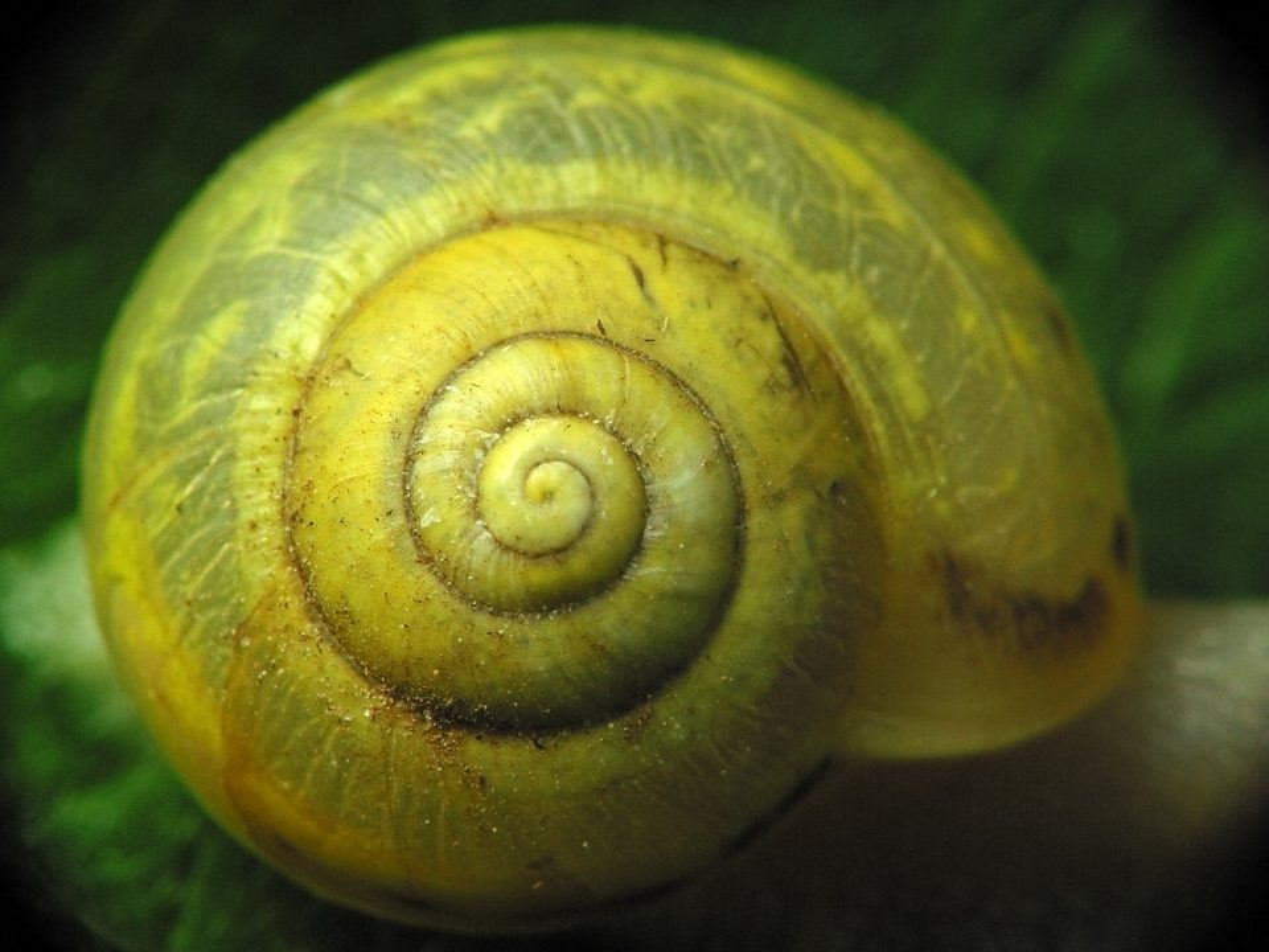 Mollusca-1933.jpg