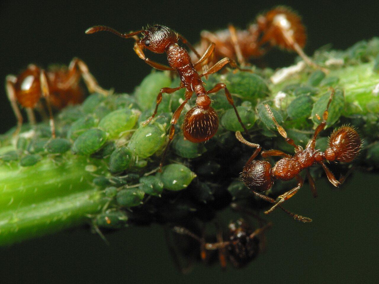 Formicidae-2146.jpg