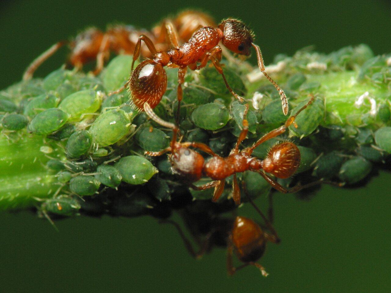 Formicidae-2147.jpg