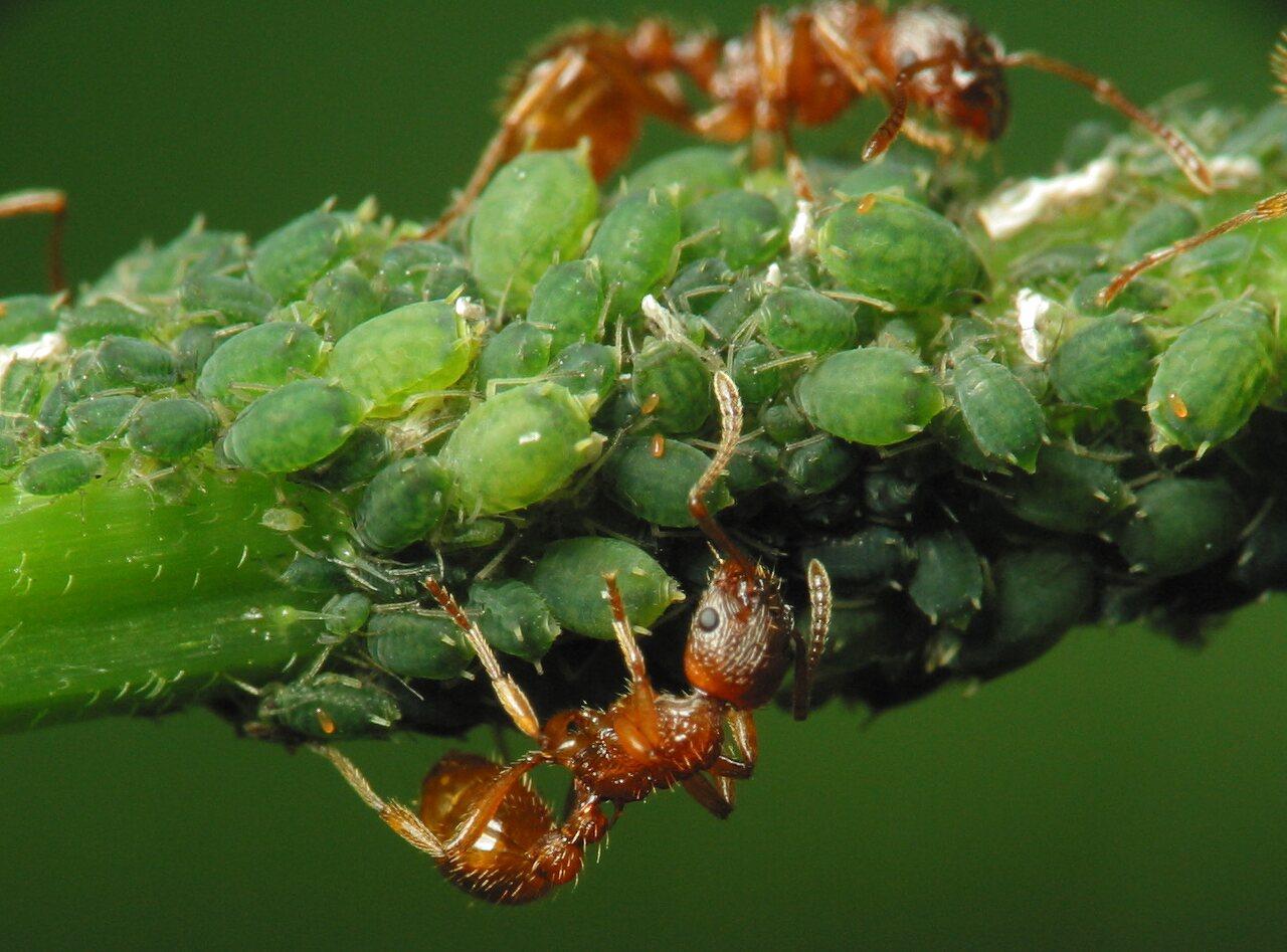Formicidae-2149.jpg