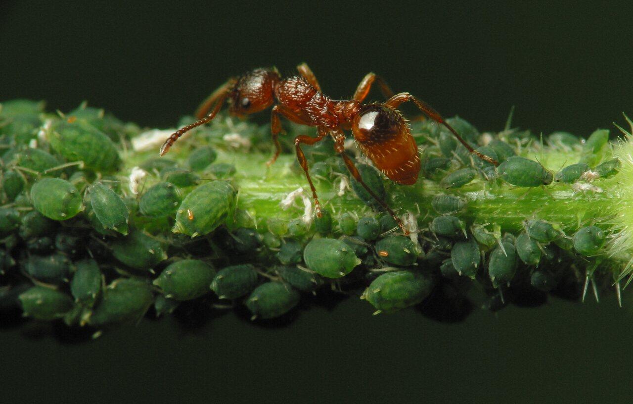 Formicidae-2150.jpg
