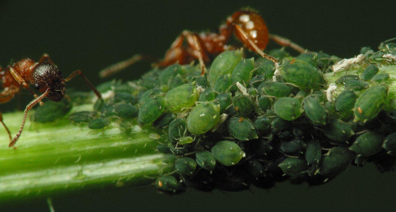 Formicidae-2151.jpg