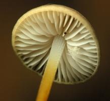 fungi 2173