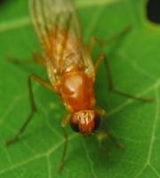 Diptera 2740