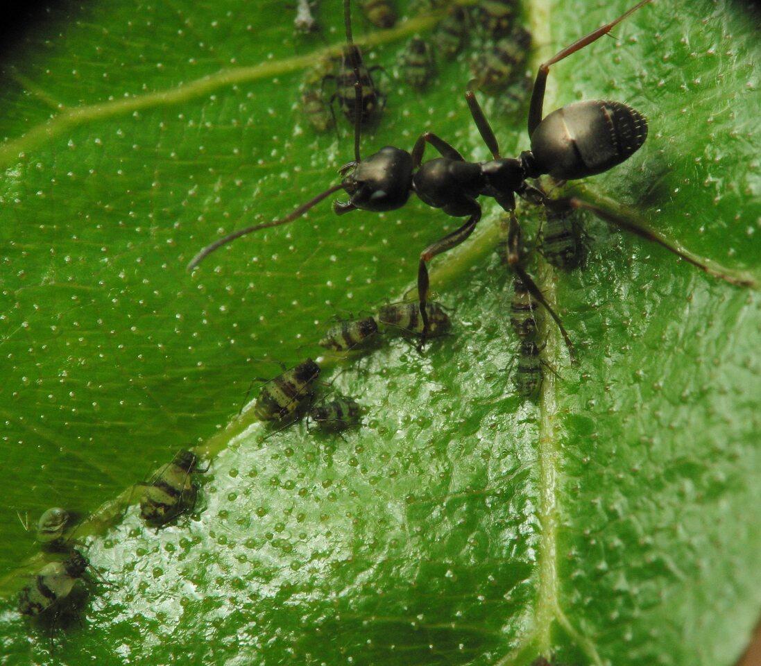 Formicidae-2934.jpg