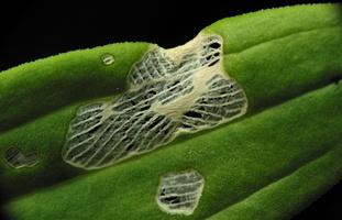 Plant 3084