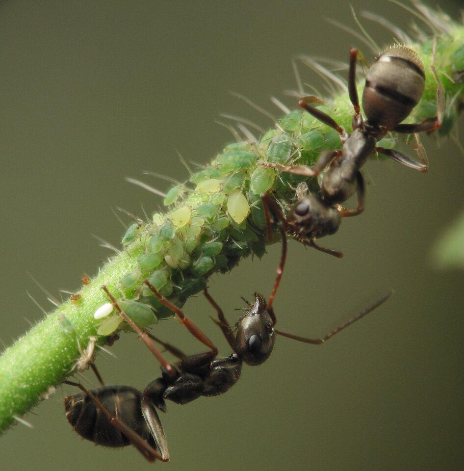 Formicidae-3266.jpg