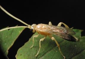 Hymenoptera 3383