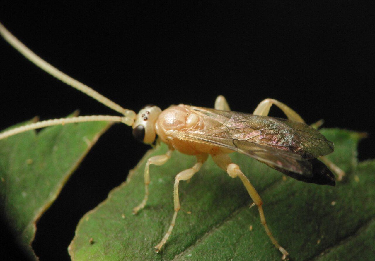 Hymenoptera-3383.jpg
