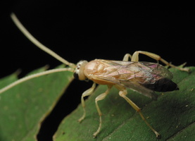 Hymenoptera 3384
