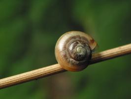 Mollusca 3447
