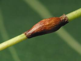 Plant 3466