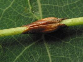 Plant 3469