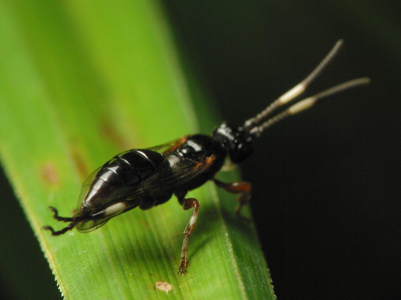 Hymenoptera-3537.jpg