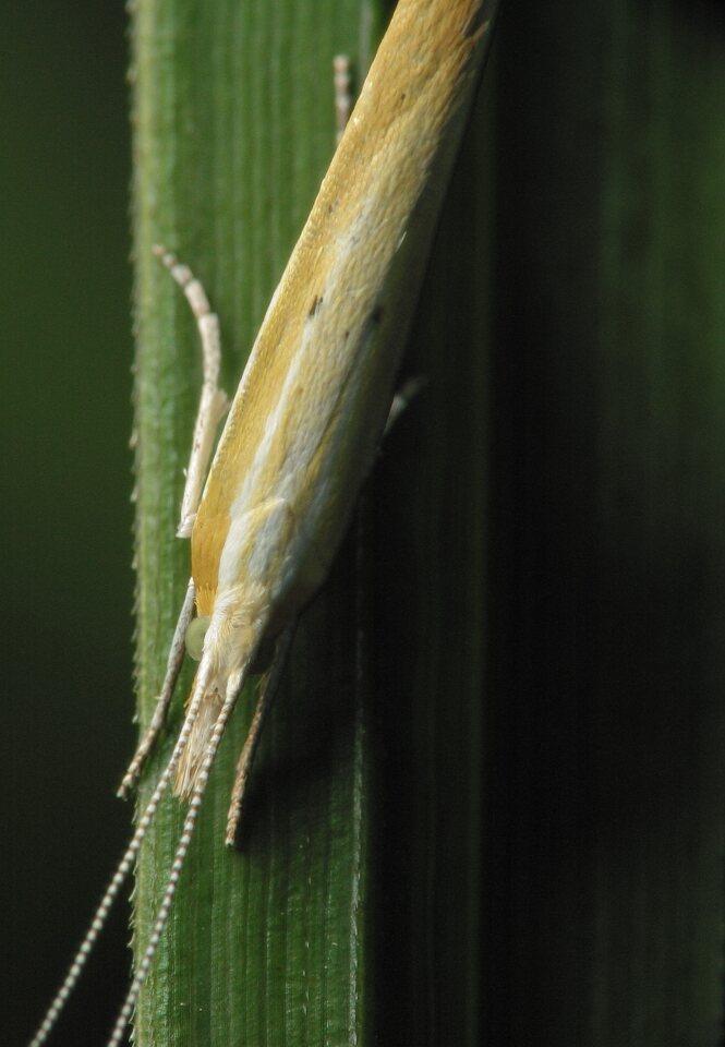 Lepidoptera-3561.jpg