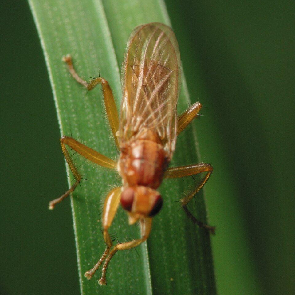Diptera-4417.jpg