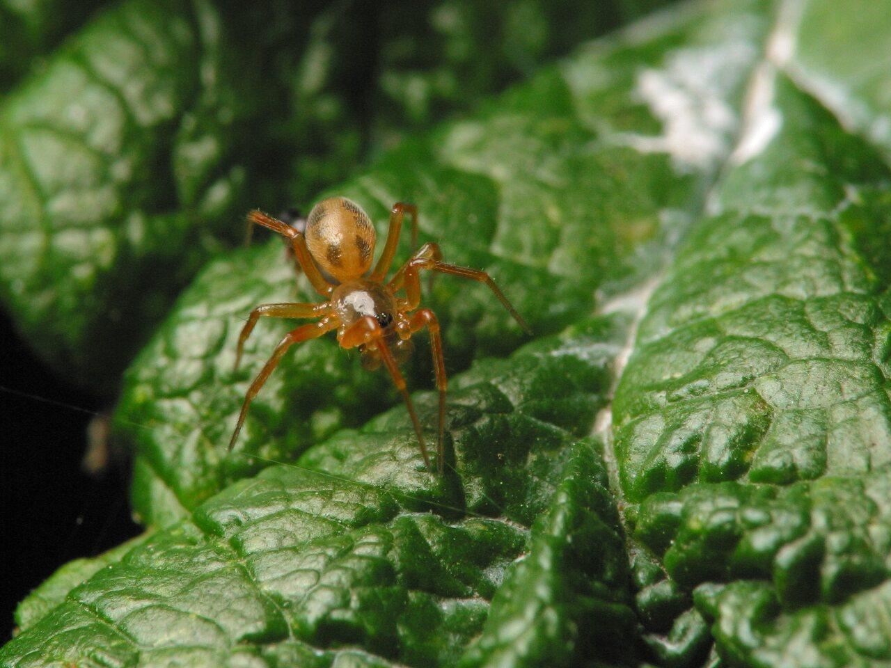 Araneae-4446.jpg