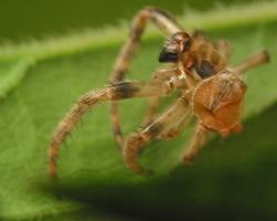 spider exuviae 4541