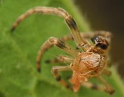 spider exuviae 4542