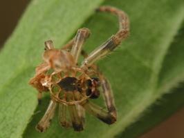 spider exuviae 4546