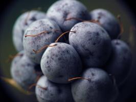 Rubus caesius fruit · paprastoji gervuogė, vaisius