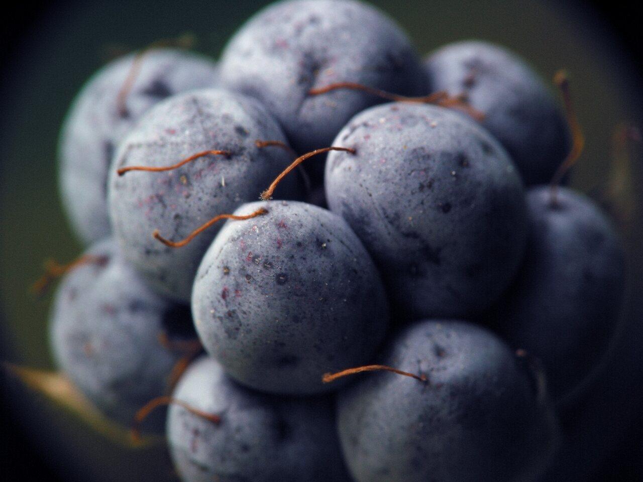 4571-Rubus-caesius.jpg
