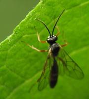 Hymenoptera 5873
