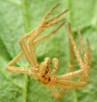 spider exuviae 6131