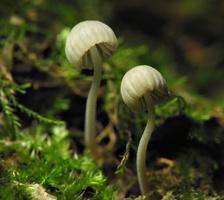 fungi 6498