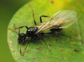 Hymenoptera 6615