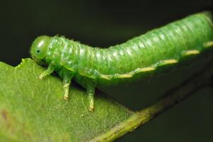 larva 6734