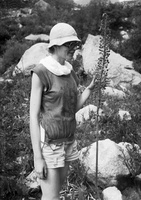 34 Dangira, augalas