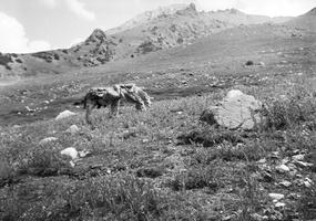 rūdos kalnas, arkliai