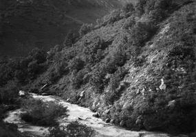 upė 1