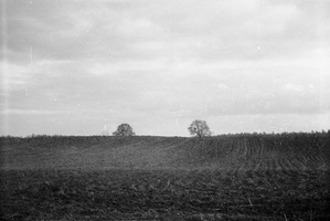 bulvių laukas