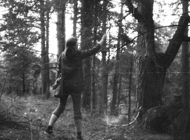 Sonata Jarmalaitė, medžių tyrimai