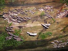fungi PB180073