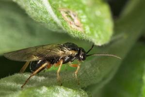 Hymenoptera 7759
