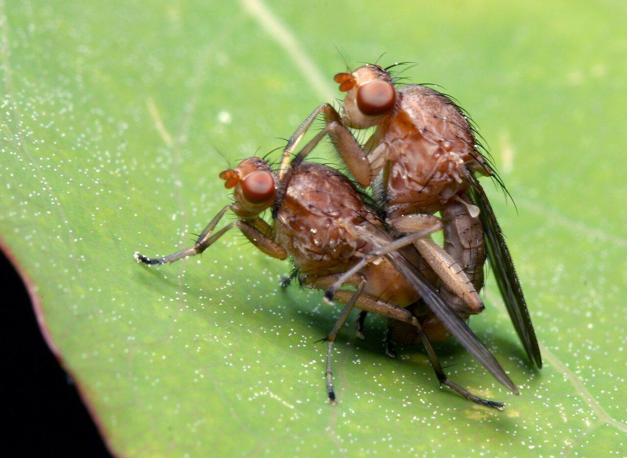 Diptera-7837.jpg