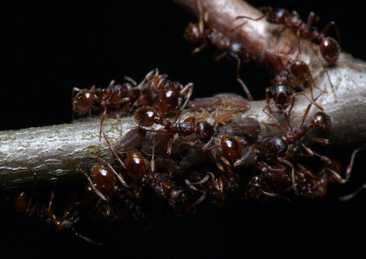 Formicidae-7843.jpg