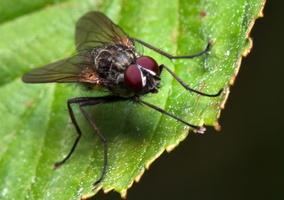 Diptera 7879