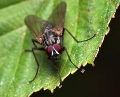 Diptera 7880