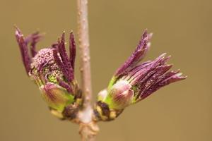 Plant 8605