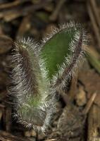 Plant 8678