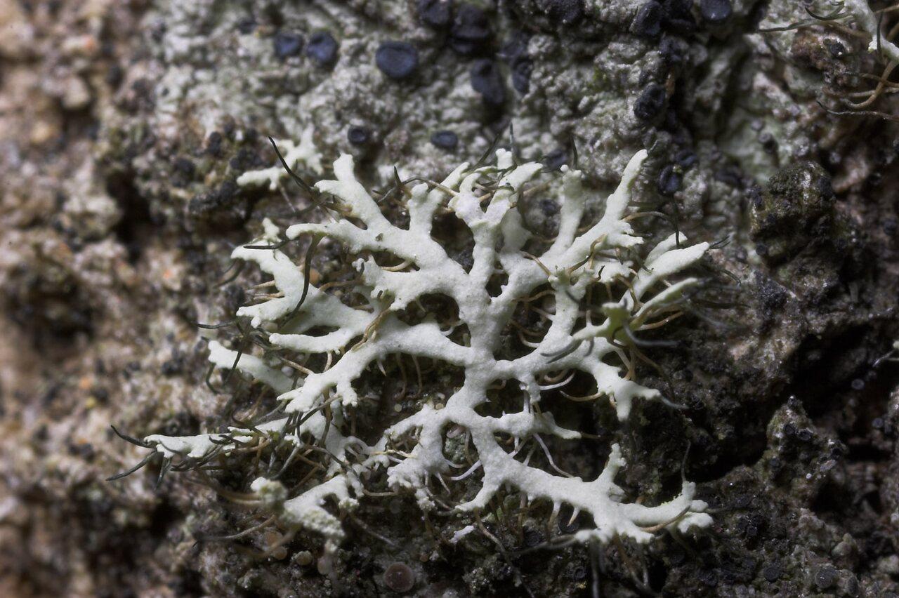 Lichens-8804.jpg
