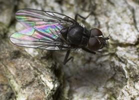 Diptera 8806