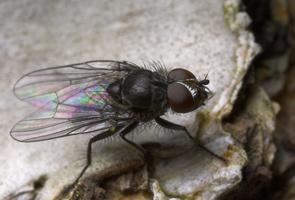 Diptera 8808