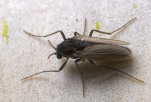 Diptera 8814